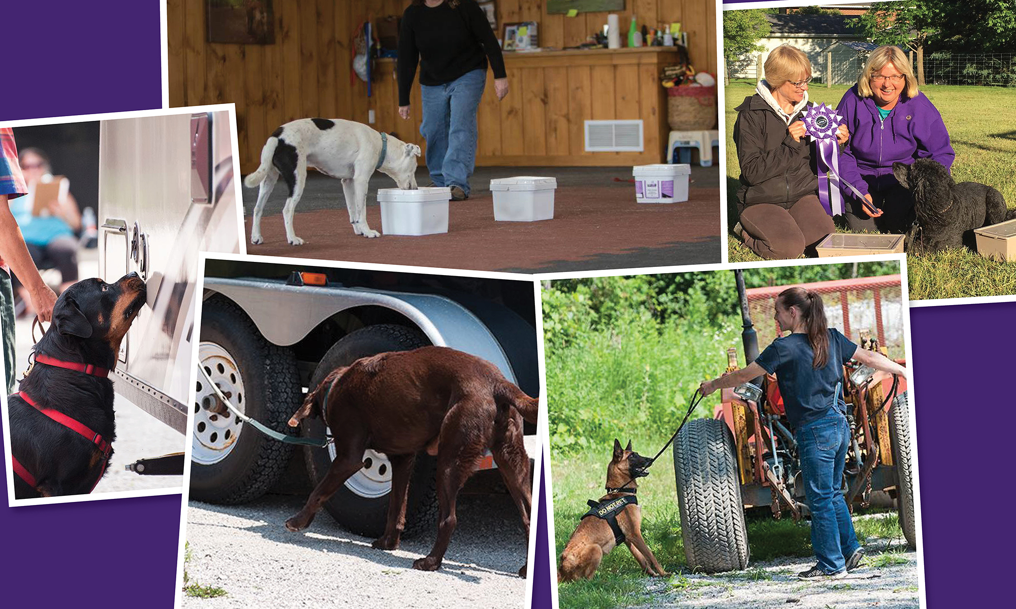 Sporting detection dogs Association